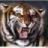 姜太公Tiger