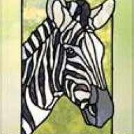 Zebra 365